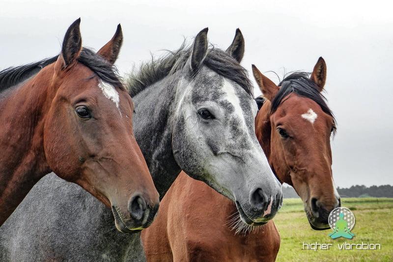 Drunvalo in biti eno s konji