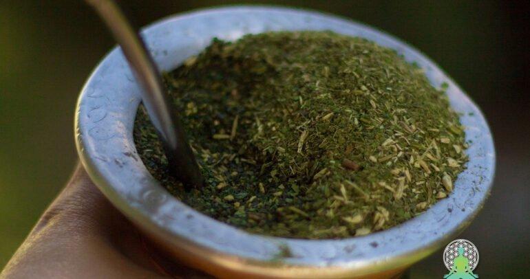 YERBA SANTA – Shasta žajbelj, Salvia Shasta, Yerba Santa, Eriodictyon californicum